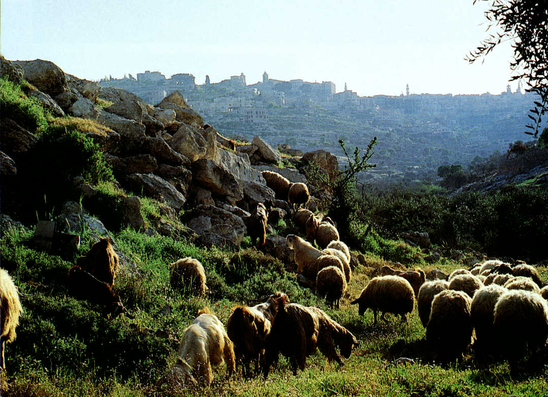Voice of an under-shepherd (Psalm 23)
