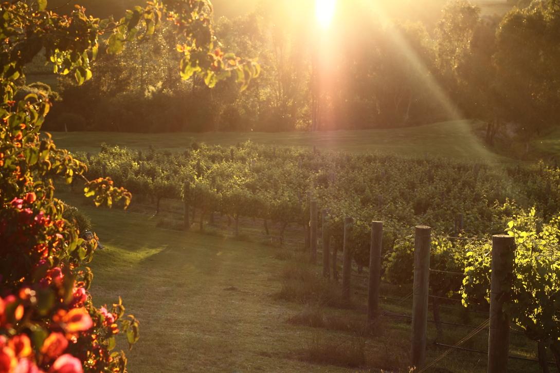 Working in God's vineyard (Matthew20:1-16)