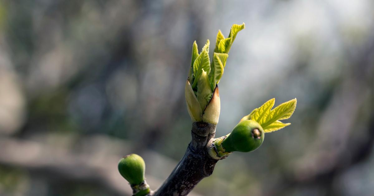 Fig trees and seasonal change (Matthew24:32-35)