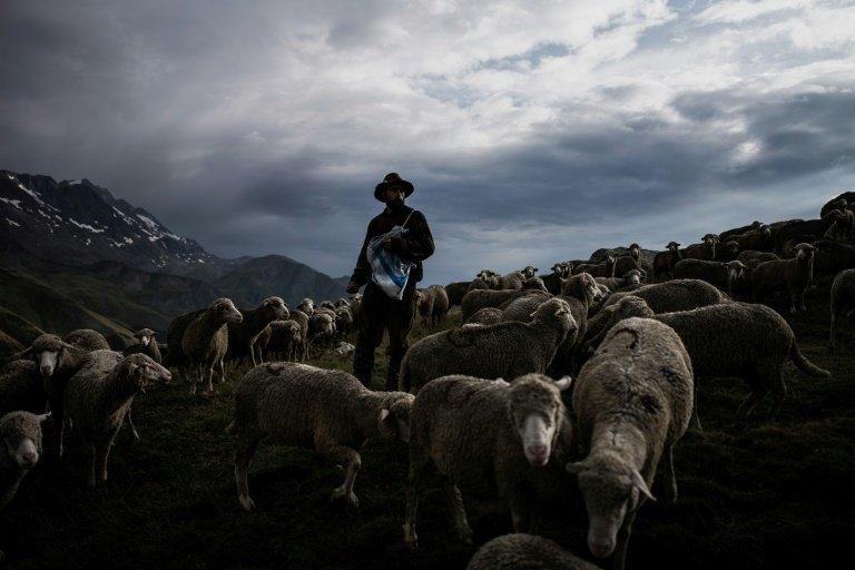Shepherds, good and bad (Zechariah10)