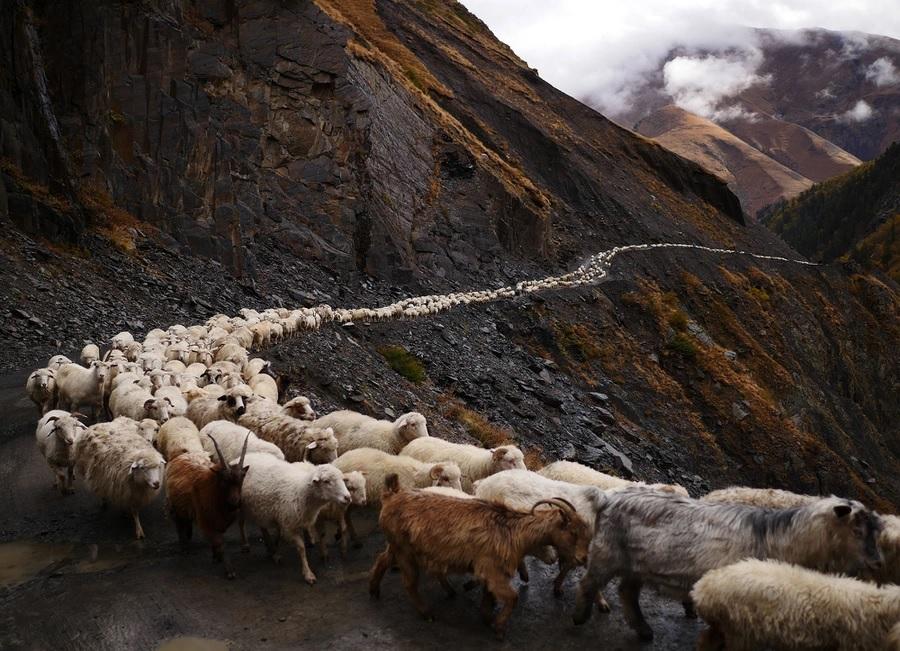 Strike the shepherd (Zechariah13:7-9)